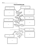 Plant Parts & Their Functions Worksheet/Matching