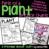 Plant Parts and Functions Anchor Chart