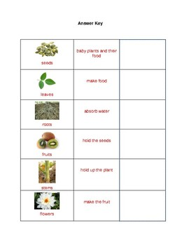 Plant Parts and Functions Differentiated Activity/Assessment