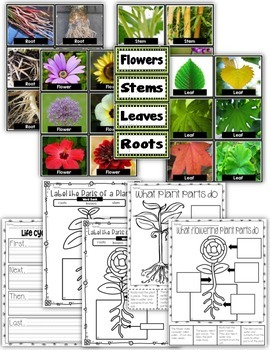 Plant Parts and Life Cycles