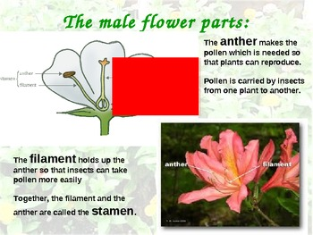 Plant Parts and Pollination