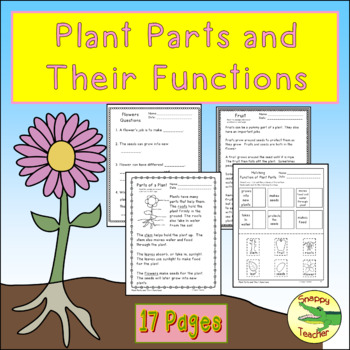 Flower Parts And Functions Worksheets & Teaching Resources | TpT