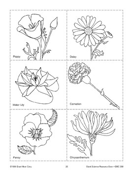 Plant Picture Cards