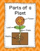 Plant Posters