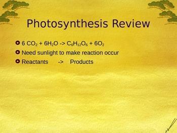Plant PowerPoint