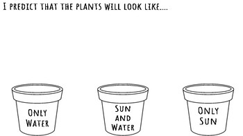 Plant Predictions Graphic Organizer