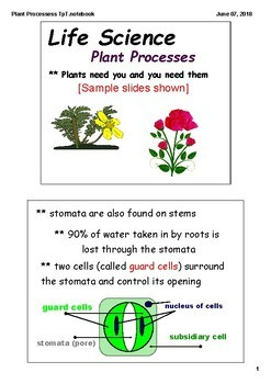 Plant Process, Structures, and Behaviors