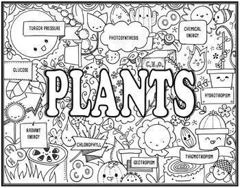 Plant Processes & Photosynthesis Seek and Find Science Doodle Page Combo