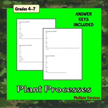 Plant Processes Worksheets