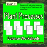 Plant Processes Worksheets