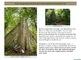 Plant Properties: Three Unique Rainforest Trees and Vines PDF