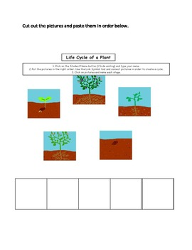 Plant Quiz (1st, 2nd, and 3rd grade)