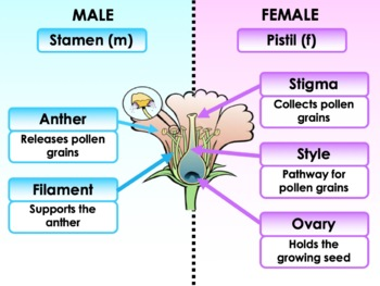 Plant Reproduction: Flowers, Pollinators and Pollination Strategies
