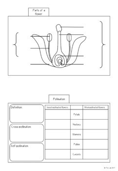 Plant Reproduction Interactive Notebook