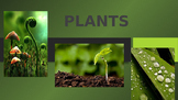 Plant Reproduction PowerPoint