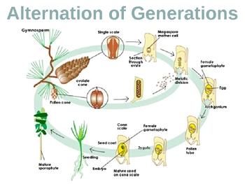 Plant Reproduction PowerPoint Presentation Lesson Plan