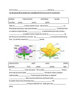 Plant Reproduction - Reproduccion de las plantas