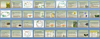 Plant Reproduction Smartboard Notebook Presentation Lesson Plan