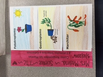 Plant Responses Foldable in SPANISH