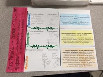 Plant Responses Foldable in SPANISH