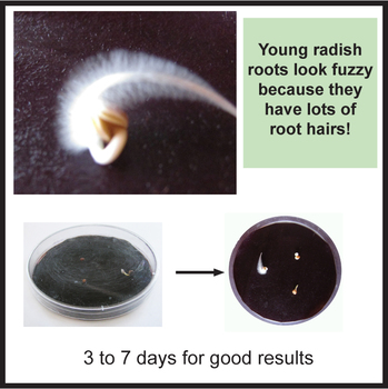 Plant Roots Activity