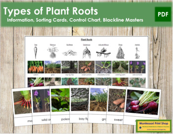 Plant Roots: Cards and Charts