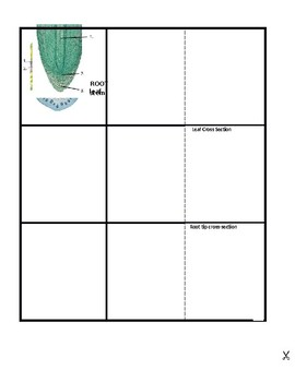 Plant - Roots, Stems & Leaves foldable