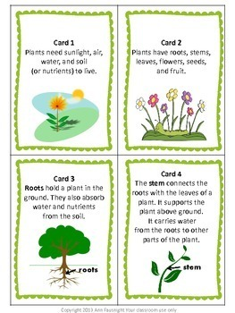 Plant Scavenger Hunt plus bonus graphic organizer