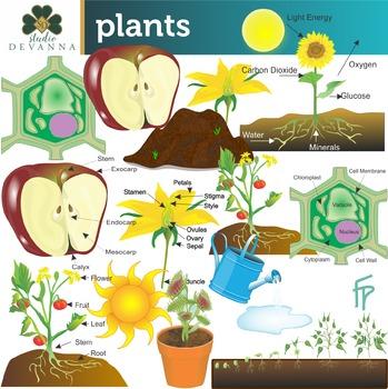Plant Science Clip Art By Studio Devanna Teachers Pay Teachers