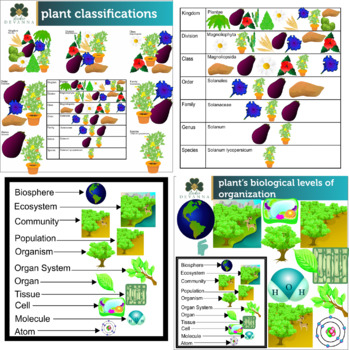 Plant Science Clip Art Bundle