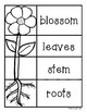 Plant Science Unit - Plant Life Cycle / Photsynthesis / Plant Parts