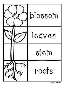 Plant Science Unit - Plant Life Cycle / Photsynthesis / Plant Parts