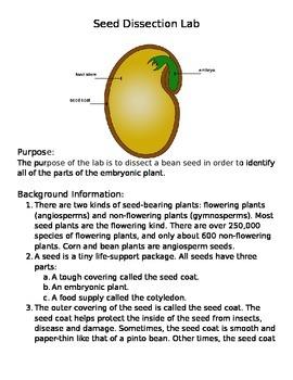 Plant Seed Lab: Monocot/Dicot