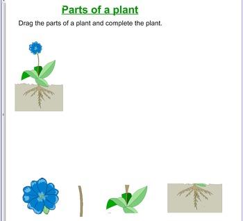 Plant Smart Board Activities:
