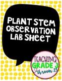 Plant Stem Observation Lab Sheet