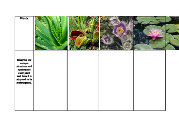 Plant Structure Adaptations for Environment