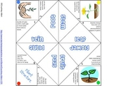 Plant Structure Cootie Catcher