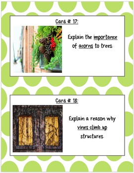 Plant Structure, Function & Adaptation Scoot Game