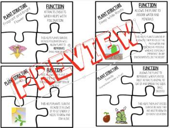 Plant Structure & Function Puzzle Activity