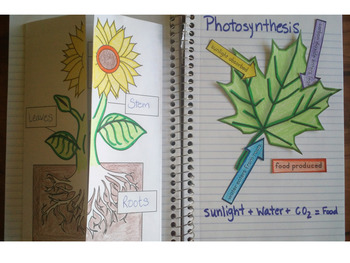 Plant Structure, Function and Classification Presentation and Interactive Notes