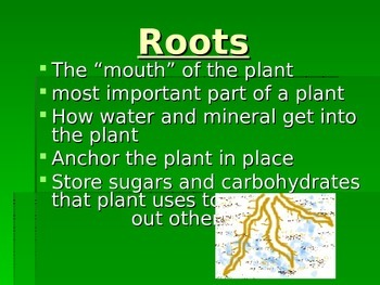 Plant Structure Power point