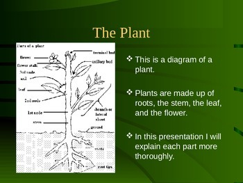 The Plant Structure PowerPoint
