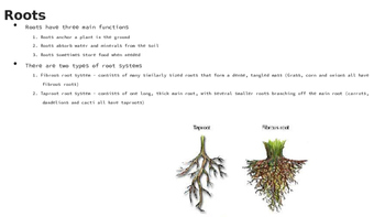 Plant Structure PowerPoint