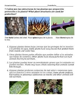 Plant Structure - Proteccion para plantas