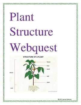 Plant Structure Webquest