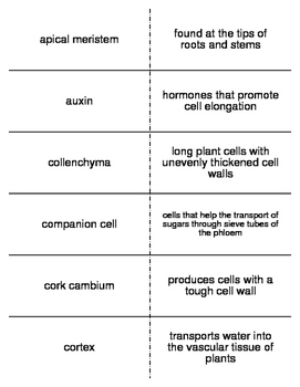 Plant Structure and Function Flash Cards for Biology II
