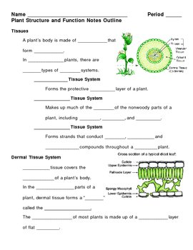 Plant Structure and Function Notes Outline Lesson Plan