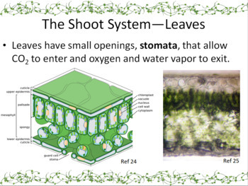 Plant Structure and Function Powerpoint Slide Show