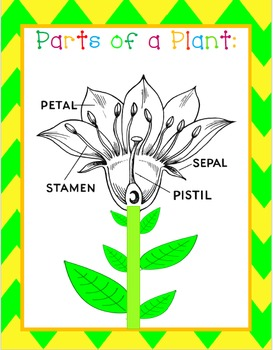 Plant Structures & Functions-Cheat Sheets/Printables