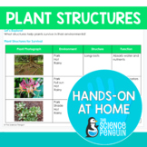 Plant Structures {Hands-on at Home} | Distance Learning